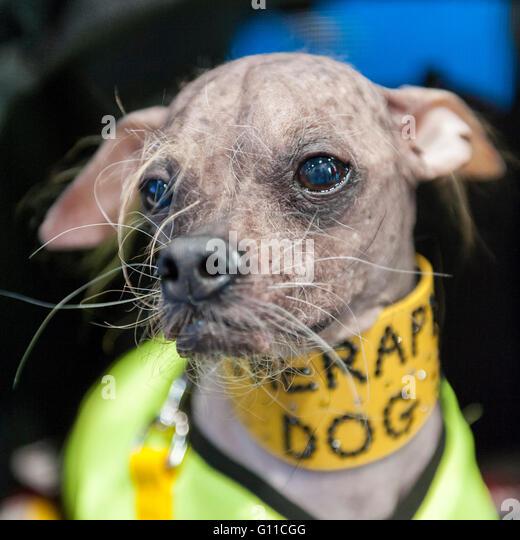 mugly meet the worlds ugliest dog of 2012