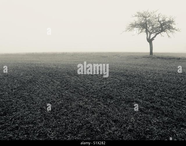 Alone Tree in the winter - Stock Image