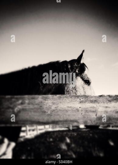 Wild West Horse - Stock-Bilder
