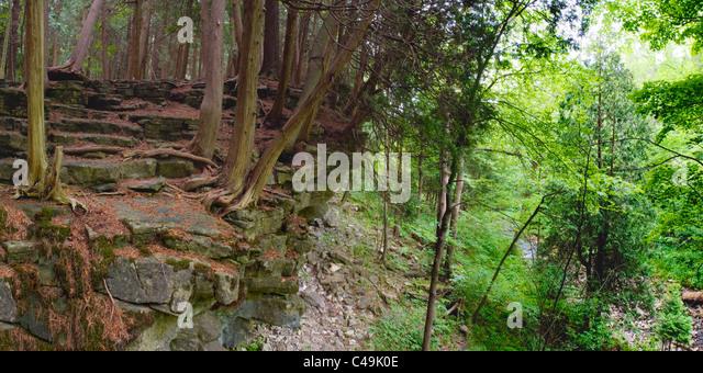 Cedar trees along the Niagara Escarpment, Bruce Trail, Ontario - Stock Image