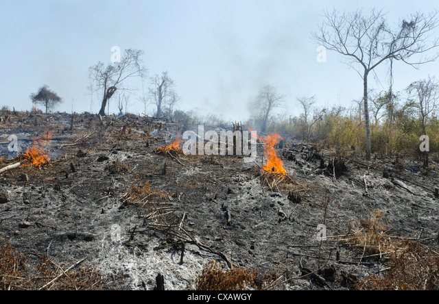 A burnt hill side after deforestation beside road from Pathein to Mawdin Sun, Irrawaddy Delta, Myanmar (Burma), - Stock Image