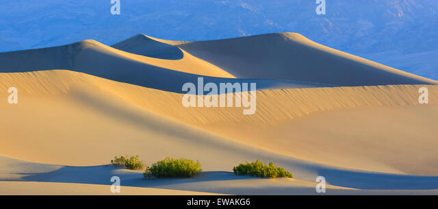 Sunrise in the Mesquite Flat Sand Dunes in Death Valley National Park in California, USA - Stock Image