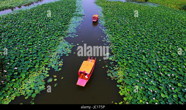 Zaozhuang, China's Shandong Province. 13th June, 2017. Visitors admire lotus flowers at a wetland park in Zaozhuang - Stock-Bilder