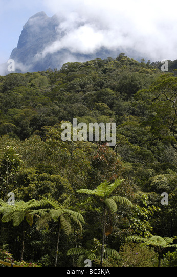 View at Mt Kinabalu, Borneo, Malaysia from National Park Headquaters - Stock Image