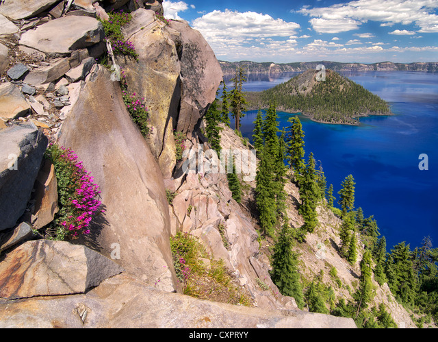 Penstemon growing on edge of Crater Lake. Crater Lake National Park, Oregon wildflowers in cliff - Stock Image