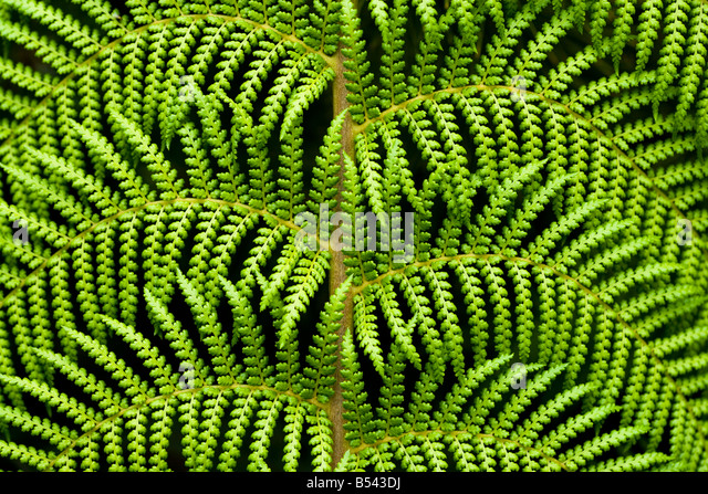 House Fern Stock Photos Amp House Fern Stock Images Alamy