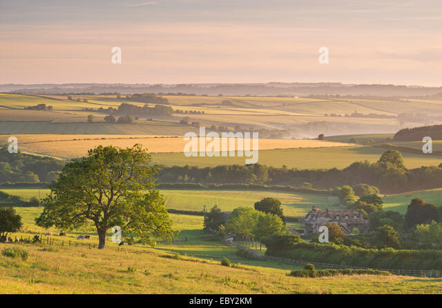 Rolling countryside and thatched cottage near Frome, Somerset, England. Summer (June) 2014. - Stock Image