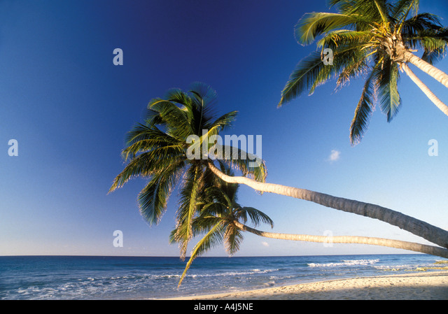 Tropics palm trees on deserted white sand beach blue caribbean sea iconic caribbean vacation image symbol emblem - Stock Image