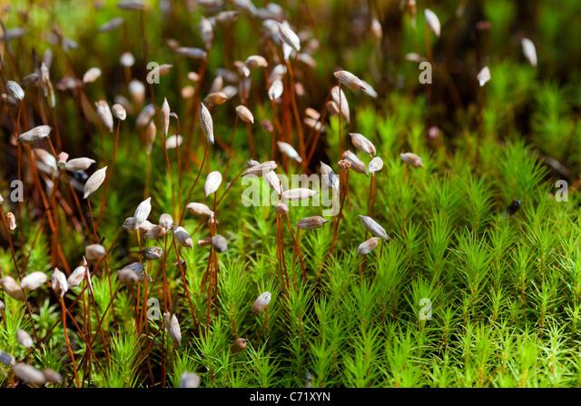 Green moss macro shot - Stock Image