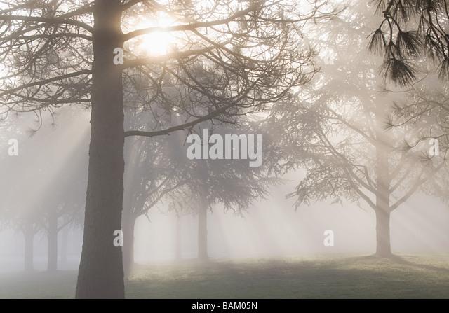 Sunlight filtering through trees - Stock Image