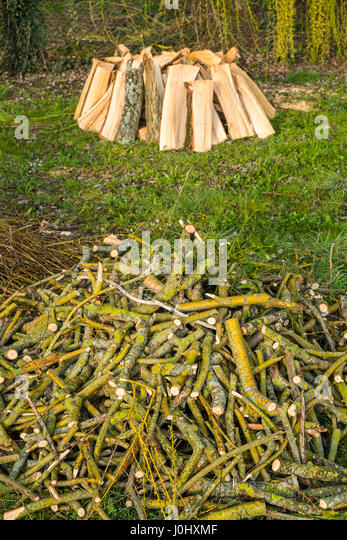 Firewood logs from fallen Willow tree - France. - Stock Image
