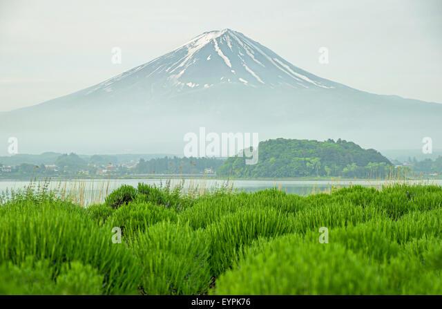Mt fuji in morning at kawaguchi, Japan - Stock Image