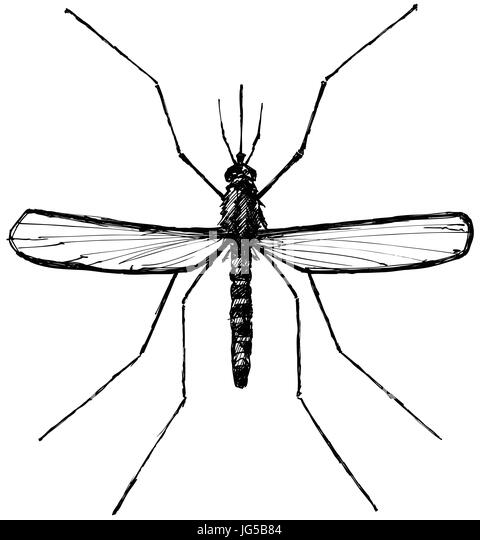 malaria vector vectors stock photos  u0026 malaria vector vectors stock images