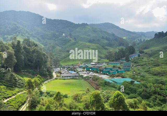 Tea Plantation, Cameron Highlands, Perak, Malaysia, Southeast Asia, Asia - Stock Image