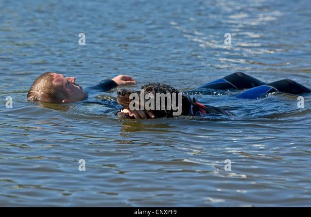 Rescue Dog Newfoundland Swimming Stock Photos & Rescue Dog ... Newfoundland Swimming