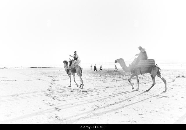 Arty picture of camels on Tamraght beach, Morocco, Africa - Stock Image