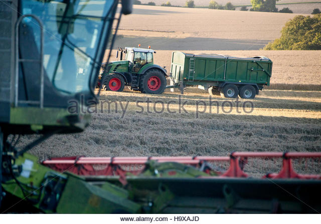 Tractor And Trailer In Field Collecting Wheat Harvest - Stock Image