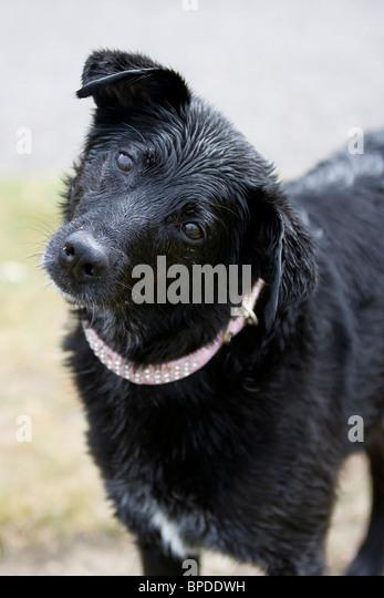 Black ebony sloppy head