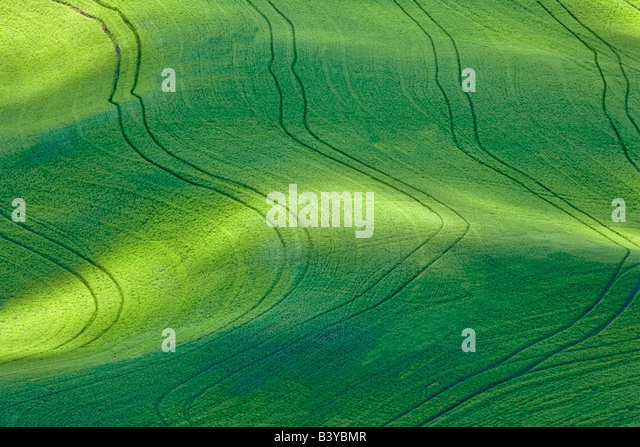 Dappled sunlight on wheat field with tractor tracks The Palouse Washington - Stock Image