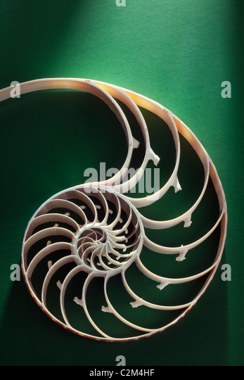 Crustacean shell cross section representing evolution, growth and change on a green background - Stock Image