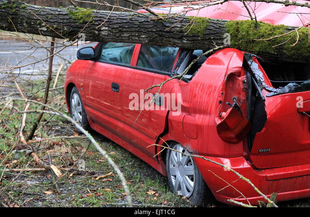 Car crushed by a Tree, Hurricane Niklas on  March 31, 2015, Deggendorf, Bavaria, Germany. Photo by Willy Matheisl - Stock Image