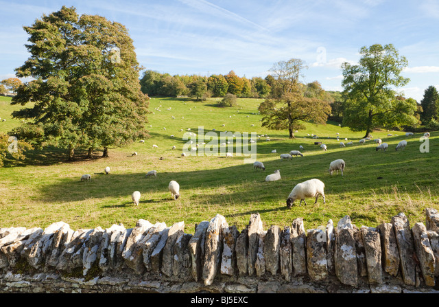 Sheep grazing the fields beside the Cotswold village of Notgrove, Gloucestershire - Stock-Bilder