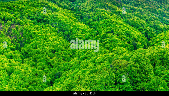 Hills and forests, - Stock Image