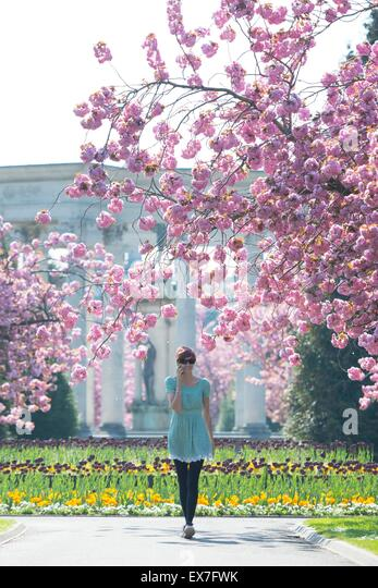 A girl walks through pink blossom in Cathays Park, Cardiff, South Wales, during warm spring weather. - Stock-Bilder
