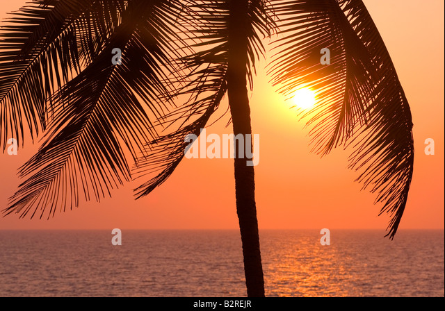 Palm Trees, Arambol, Goa, India, Subcontinent, Asia - Stock-Bilder