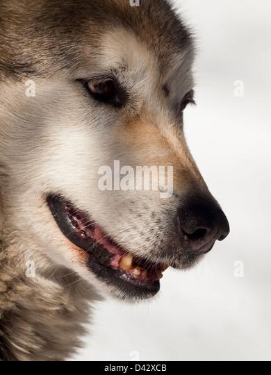 an analysis of speech in teen wolf by rod daniel Teen wolf 1985 #amonologueaday   directed by: rod daniel  produced by: thomas coleman mark levinson george w perkins michael rosenblatt scott m rosenfel.