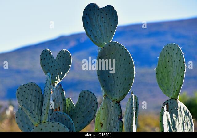 Desert Hearts - Stock Image