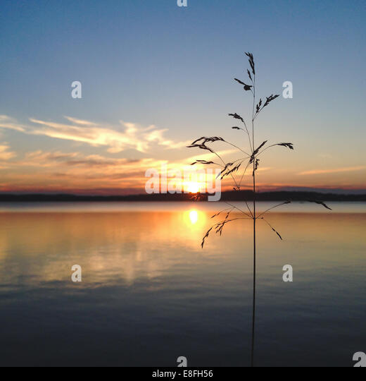 Wild grass at sunset - Stock-Bilder