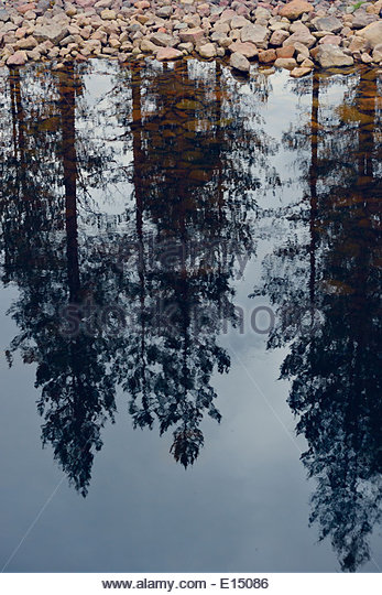 Sweden, Orsa, Reflection of trees in a lake - Stock Image