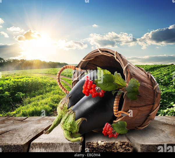 Eggplants and viburnum in a basket on table - Stock Image