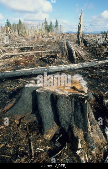 Quileute Indian Reservation, clearcut logging, Olympic Peninsula, Washington USA - Stock Image