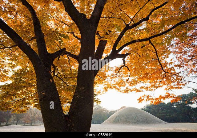 Mound tomb in a park, Royal Tomb Of King Naemul Of Silla, Gyeongju, South Korea - Stock Image