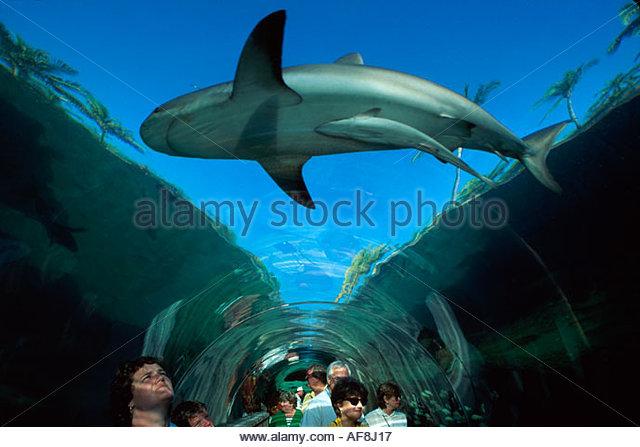 Bahamas New Providence Nassau Paradise Atlantis Resort Predator Lagoon underwater tunnel - Stock Image