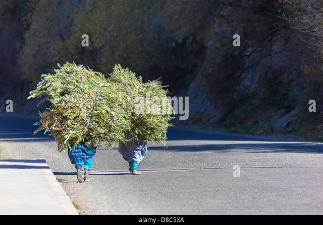 Two farmer woman walking with their load of grass. - Stock Image