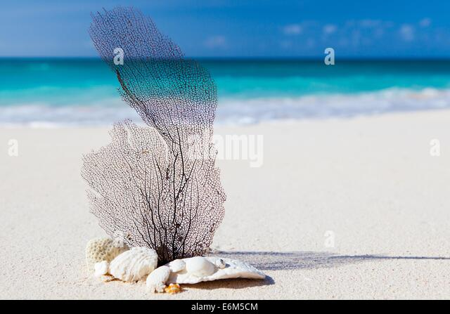 beach caribbean blue beauty concept exotic nature - Stock Image