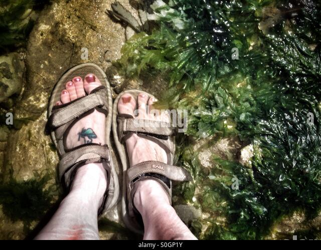 Woman's feet in a rock pool at the seaside - Stock Image