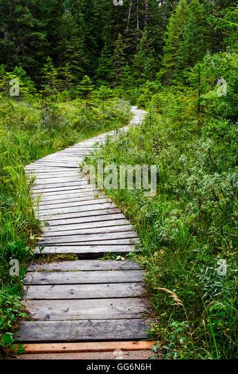 Wood Plank Walkway : Wood plank walkway stock photos