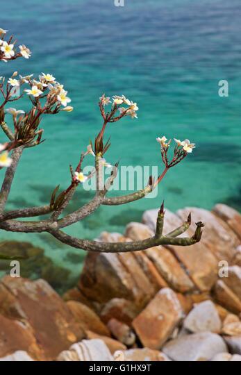 Batu Batu Island Pulau Tengah Malaysia tropical - Stock Image