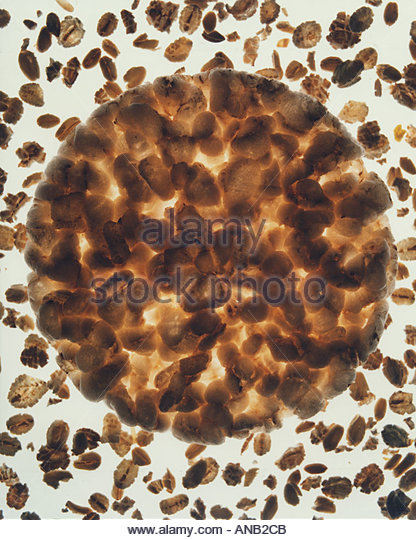 Abstraction with rice cracker and oatmeal flakes - Stock Image