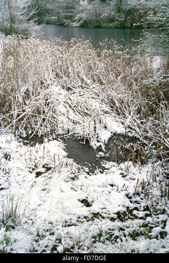 Light dusting of snow on trees around frozen village pond in Cambridgeshire - Stock Image
