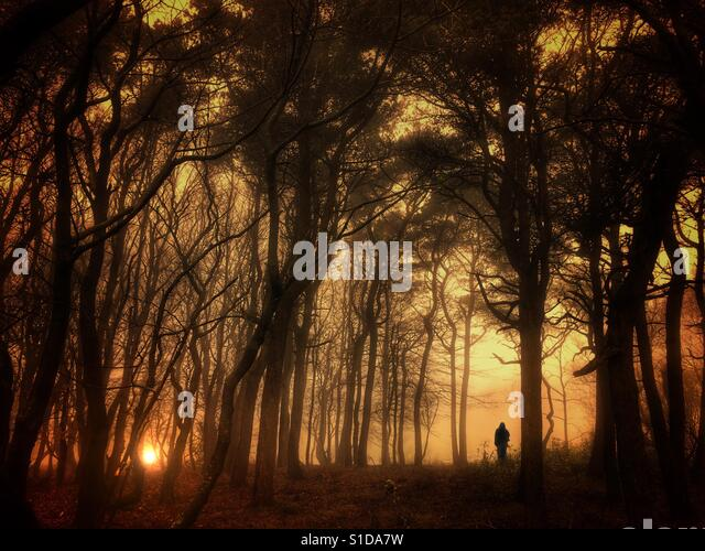 Silhouetted figure on skyline in wood at sunset - Stock-Bilder