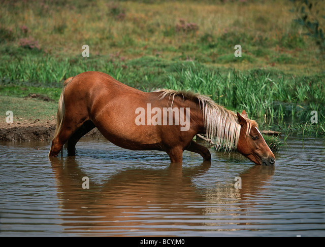 Forestponies stock photos forestponies stock images alamy for Negative show pool horse racing