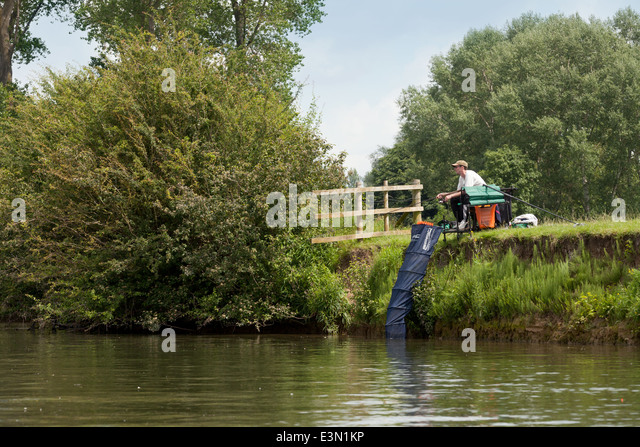 Angler angling, the River Thames at Wallingford, Oxfordshire England UK - Stock Image