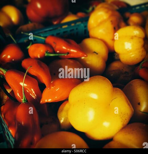 Freshly picked peppers and chillies - Stock Image