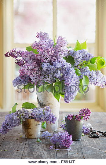 Lilacs in vases on table - Stock Image