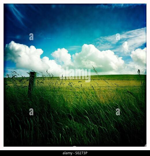 White clouds and green field - Stock Image